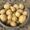 Продам картофель гала без химии #1633074