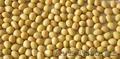 Очищенная соя объемом до 500 тонн в г.Талдыкорган